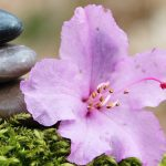 Strategies for Healing bring results